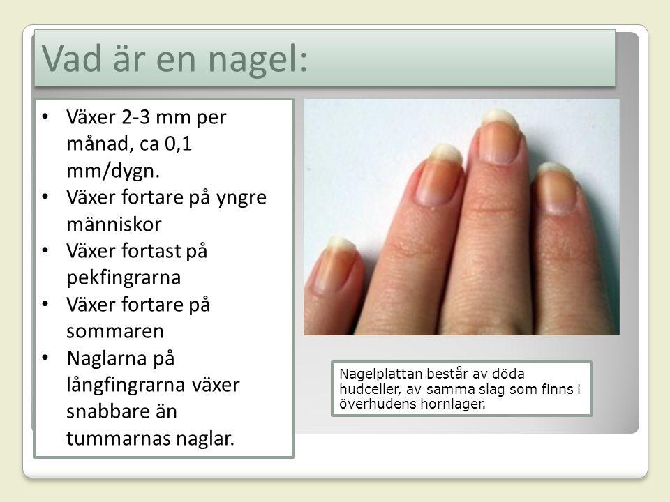 Vad är en nagel: Växer 2-3 mm per månad, ca 0,1 mm/dygn.