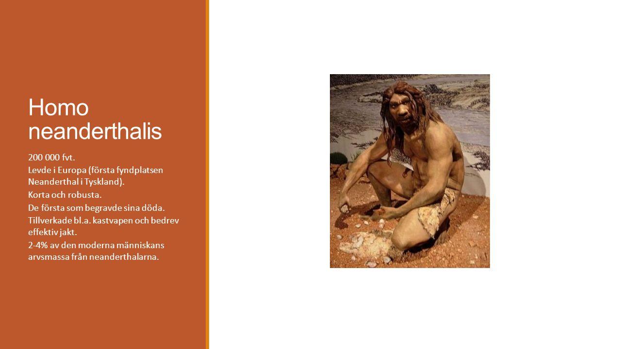 Homo neanderthalis 200 000 fvt.