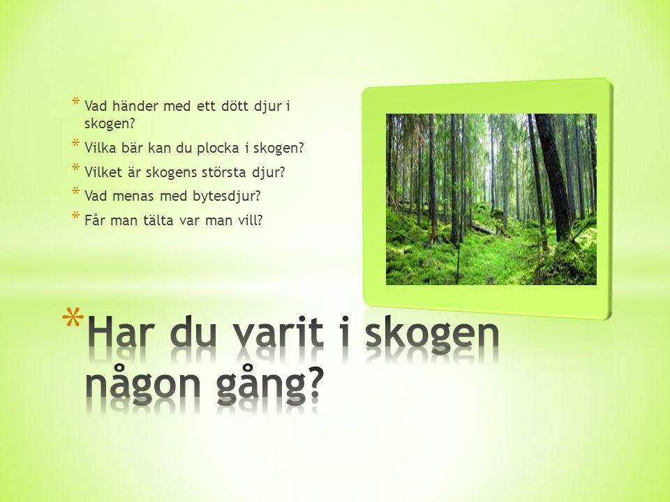 Har du varit i skogen någon gång