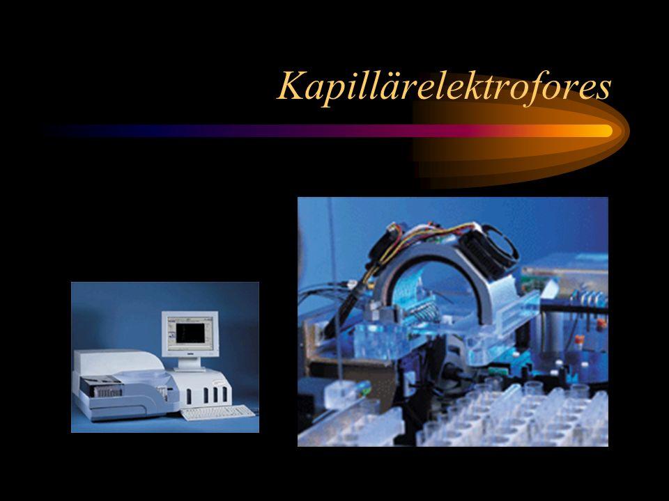 Kapillärelektrofores