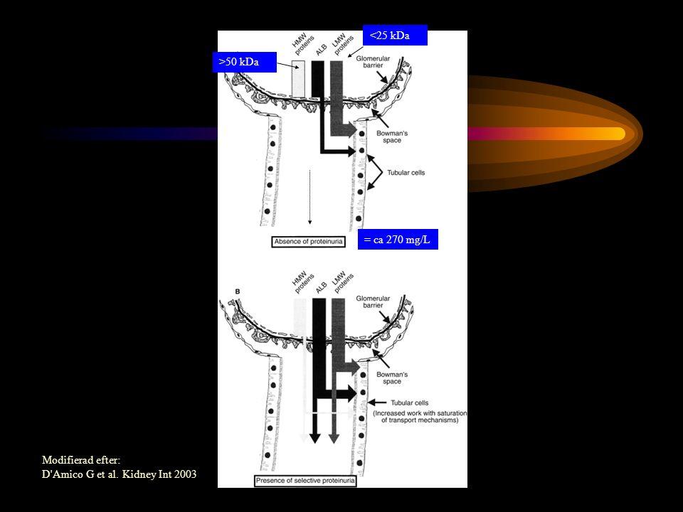 <25 kDa >50 kDa = ca 270 mg/L Modifierad efter: D Amico G et al. Kidney Int 2003
