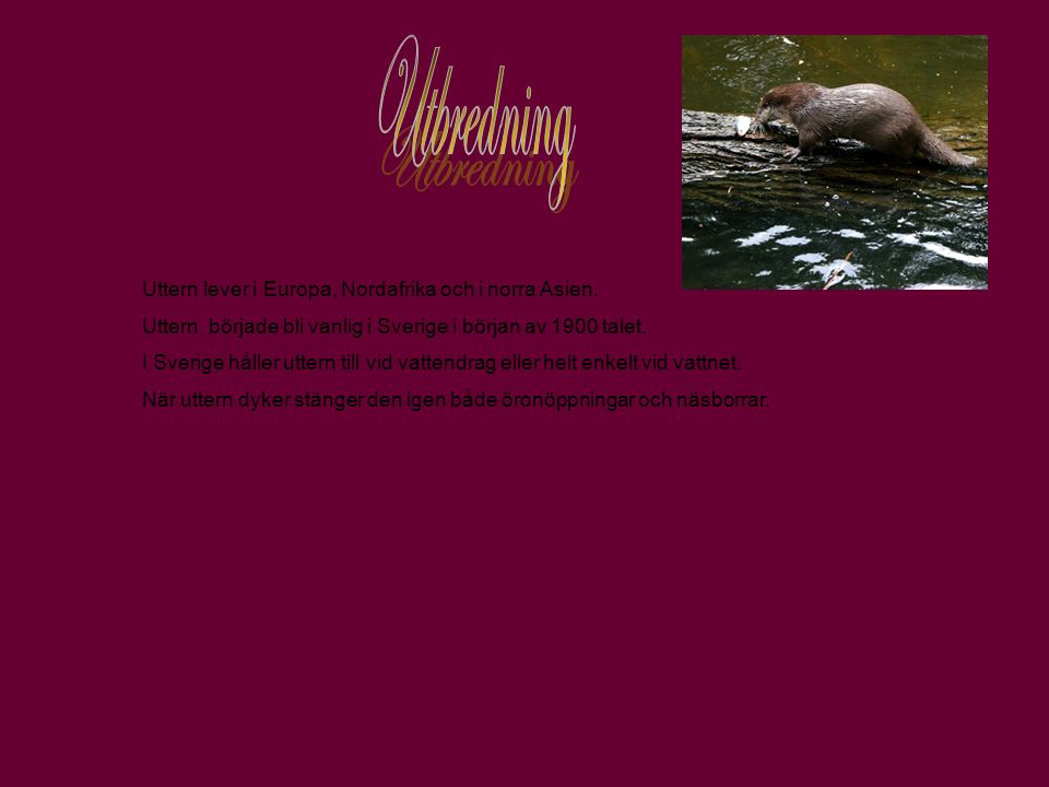Utbredning Uttern lever i Europa, Nordafrika och i norra Asien.