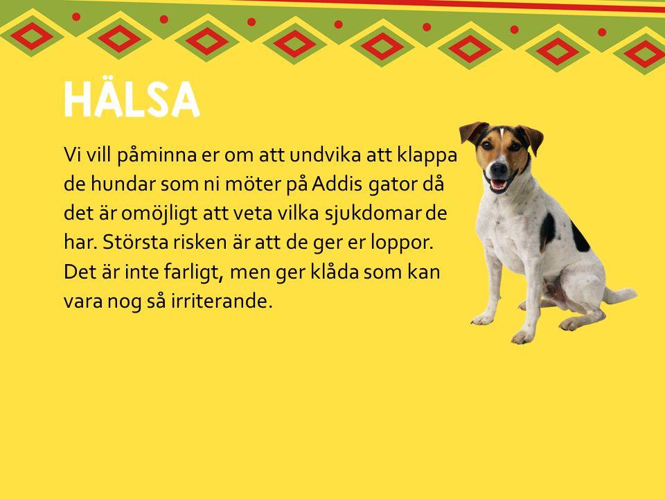 Vi vill påminna er om att undvika att klappa de hundar som ni möter på Addis gator då det är omöjligt att veta vilka sjukdomar de har.