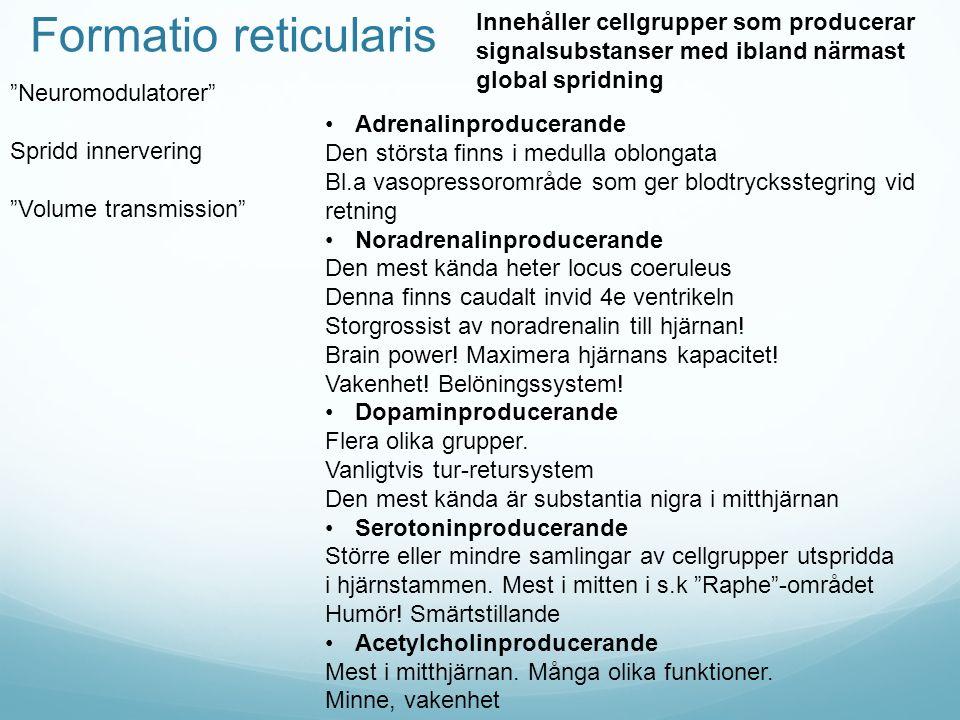 Formatio reticularis Innehåller cellgrupper som producerar