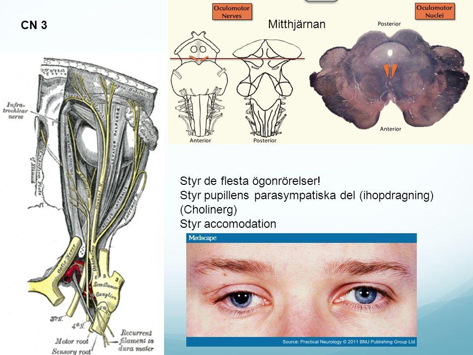 CN 3 Mitthjärnan. Styr de flesta ögonrörelser! Styr pupillens parasympatiska del (ihopdragning) (Cholinerg)