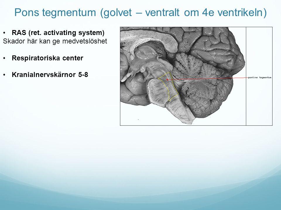 Pons tegmentum (golvet – ventralt om 4e ventrikeln)
