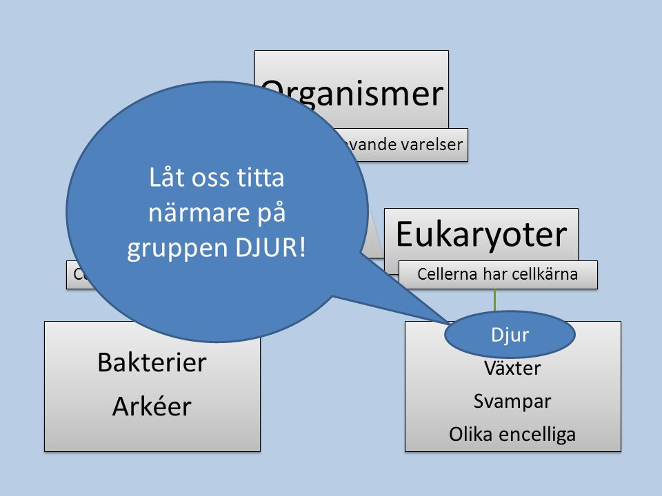 Organismer Prokaryoter Eukaryoter