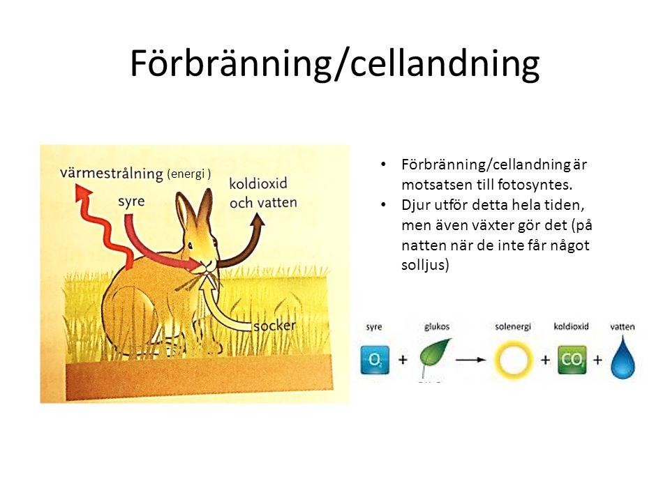 Förbränning/cellandning