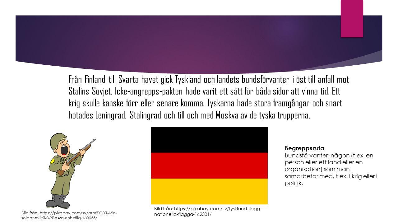 Från Finland till Svarta havet gick Tyskland och landets bundsförvanter i öst till anfall mot Stalins Sovjet. Icke-angrepps-pakten hade varit ett sätt för båda sidor att vinna tid. Ett krig skulle kanske förr eller senare komma. Tyskarna hade stora framgångar och snart hotades Leningrad, Stalingrad och till och med Moskva av de tyska trupperna.
