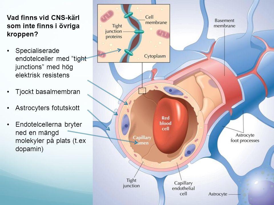 Vad finns vid CNS-kärl som inte finns i övriga kroppen