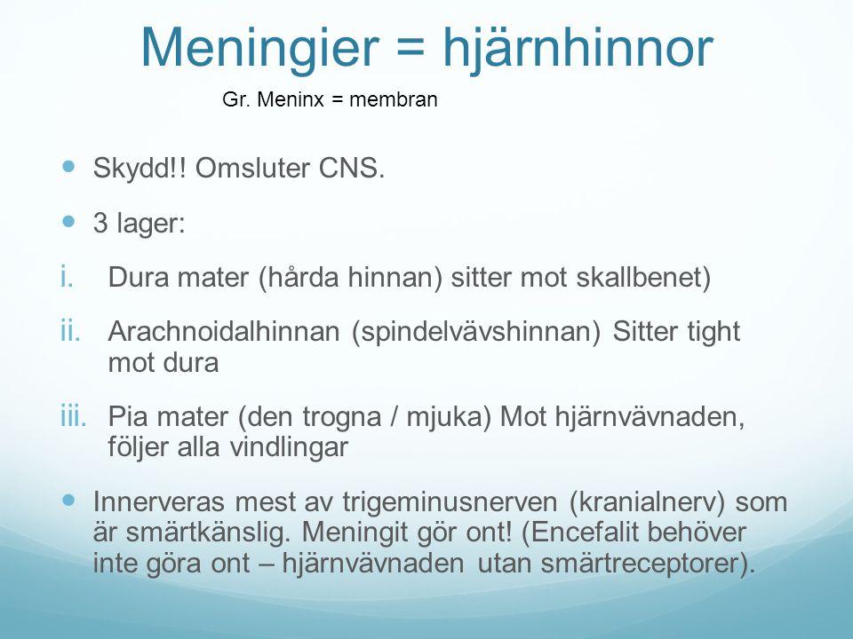 Meningier = hjärnhinnor