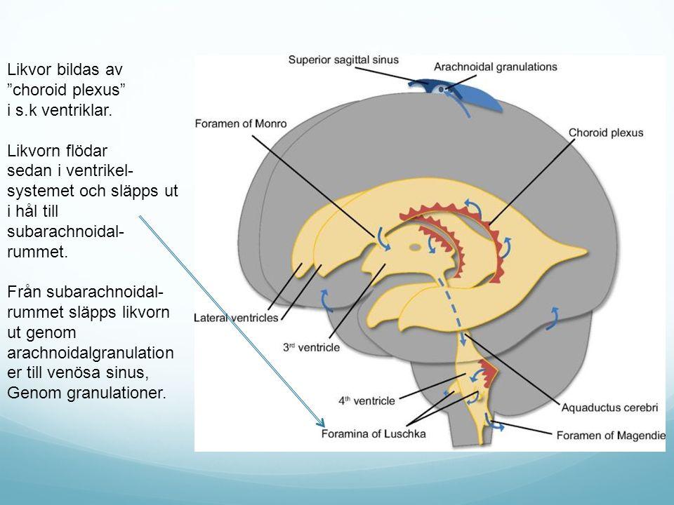 Likvor bildas av choroid plexus i s.k ventriklar. Likvorn flödar. sedan i ventrikel- systemet och släpps ut i hål till subarachnoidal-rummet.