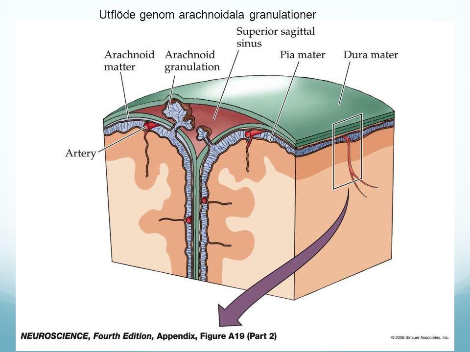 Utflöde genom arachnoidala granulationer