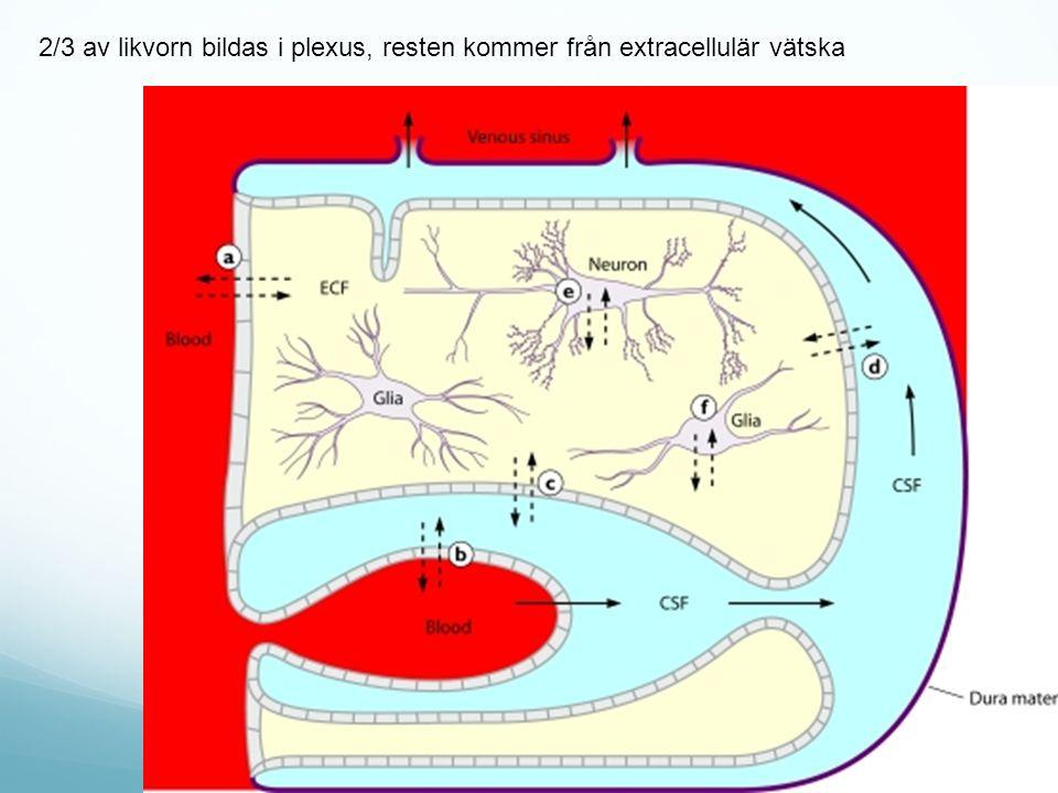2/3 av likvorn bildas i plexus, resten kommer från extracellulär vätska