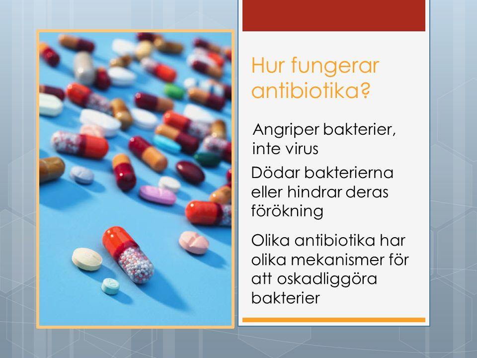 Hur fungerar antibiotika