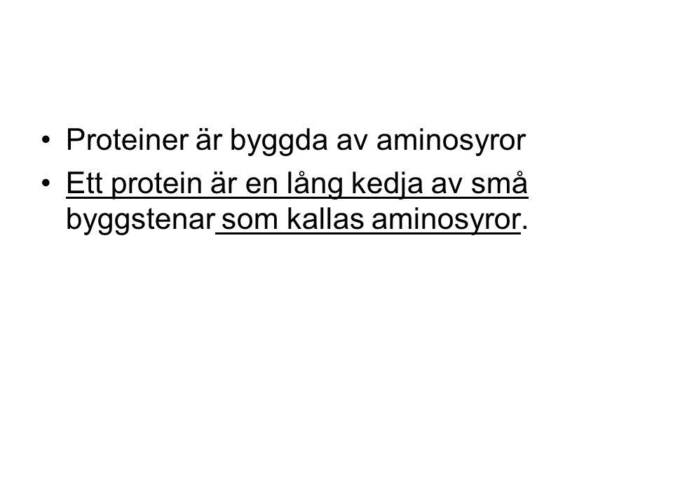 Proteiner är byggda av aminosyror