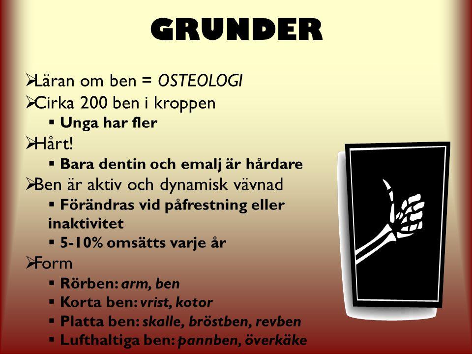 GRUNDER Läran om ben = OSTEOLOGI Cirka 200 ben i kroppen Hårt!