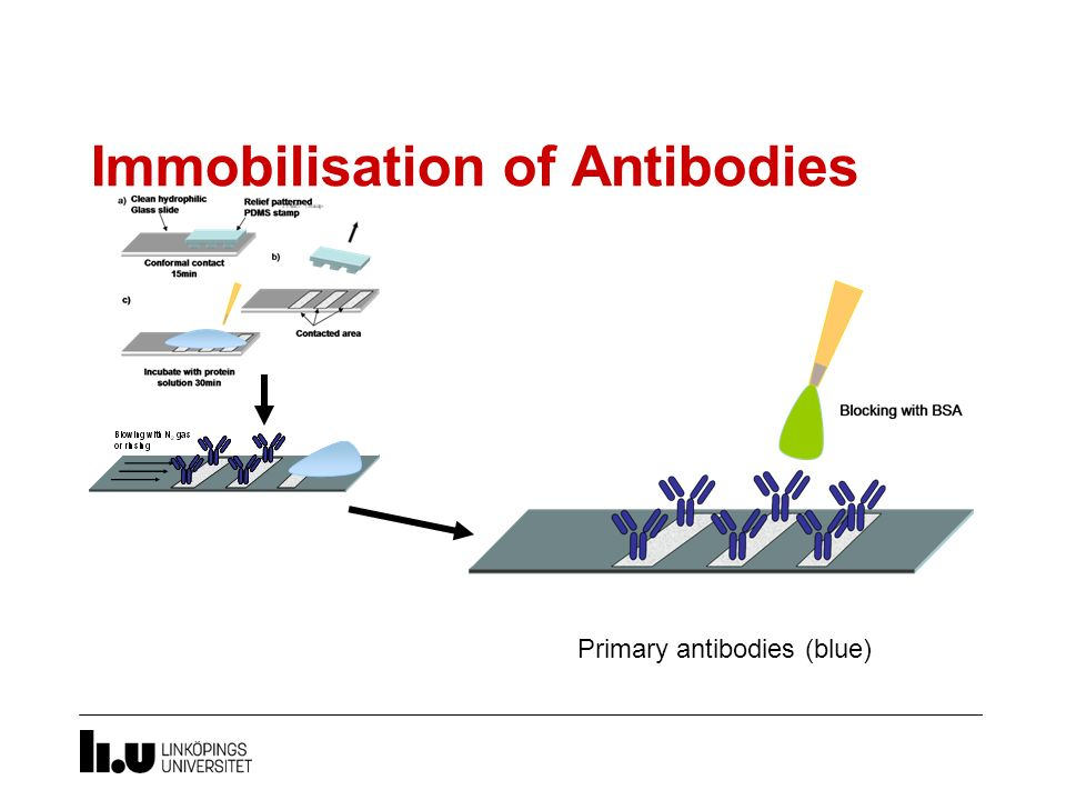 Immobilisation of Antibodies
