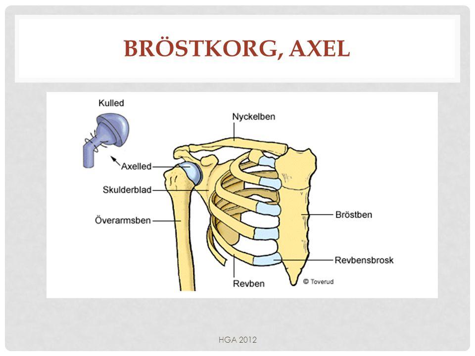 Bröstkorg, axel HGA 2012