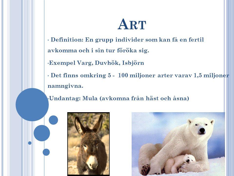 Art Definition: En grupp individer som kan få en fertil avkomma och i sin tur föröka sig. Exempel Varg, Duvhök, Isbjörn.