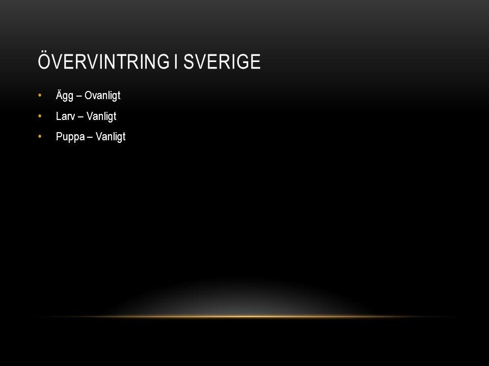 Övervintring i Sverige