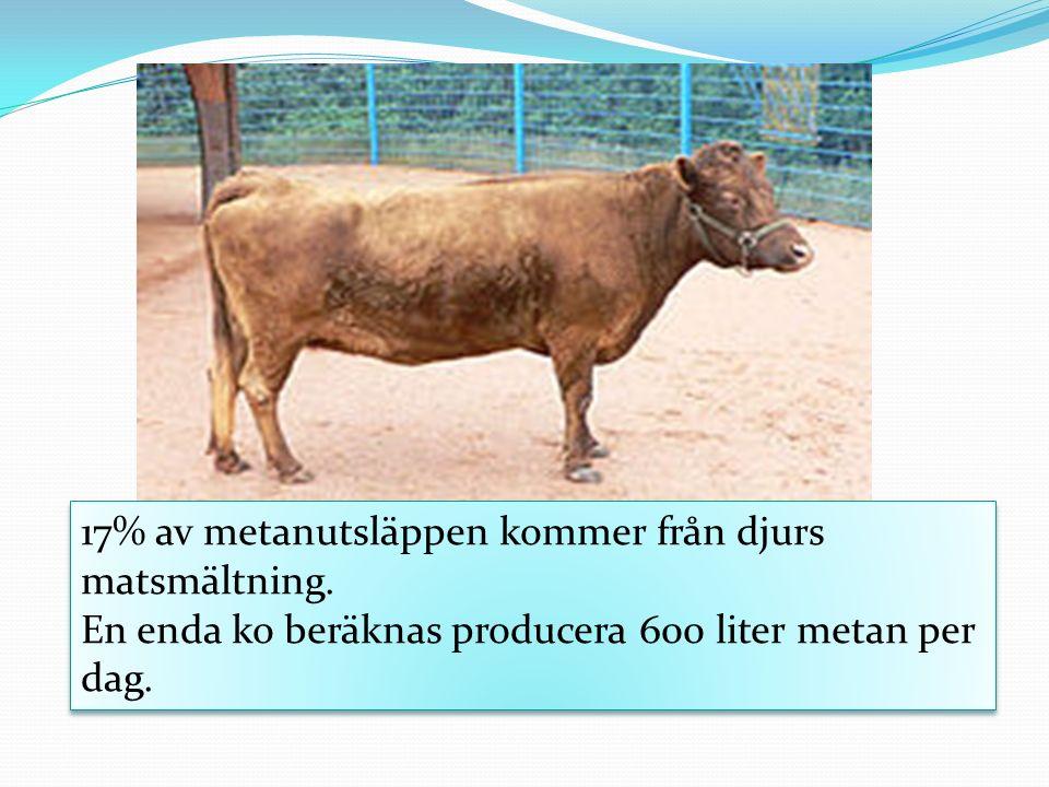 17% av metanutsläppen kommer från djurs matsmältning.