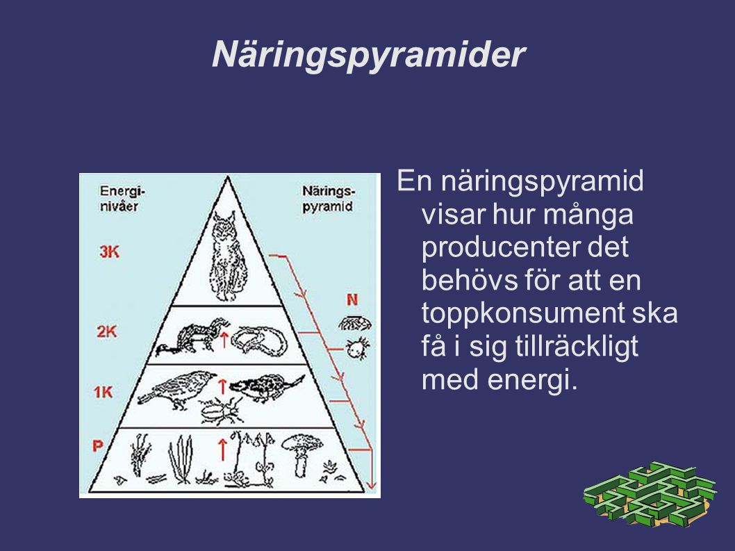 Näringspyramider En näringspyramid visar hur många producenter det behövs för att en toppkonsument ska få i sig tillräckligt med energi.