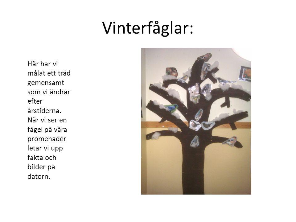 Vinterfåglar: