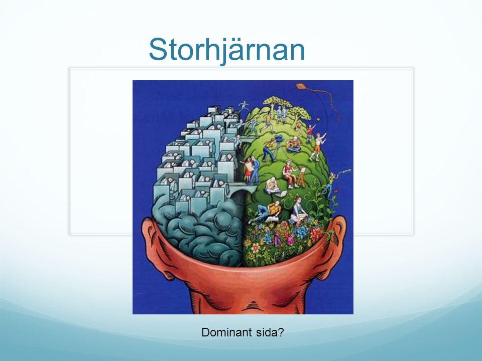 Storhjärnan Dominant sida