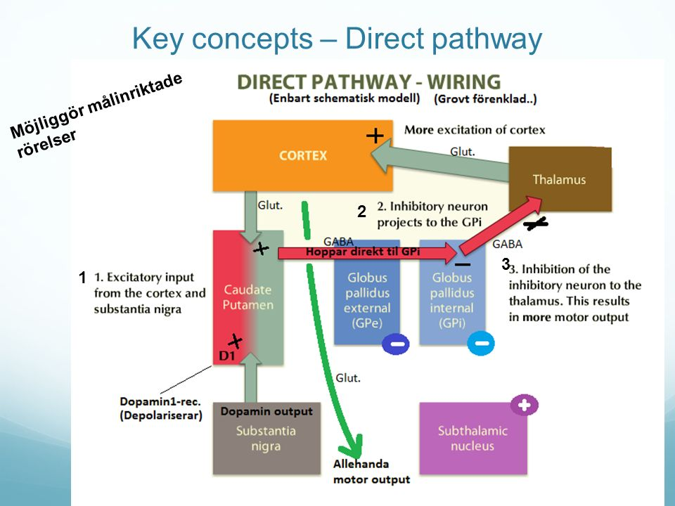 Key concepts – Direct pathway