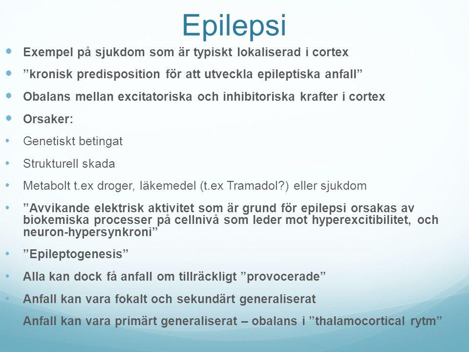 Epilepsi Exempel på sjukdom som är typiskt lokaliserad i cortex