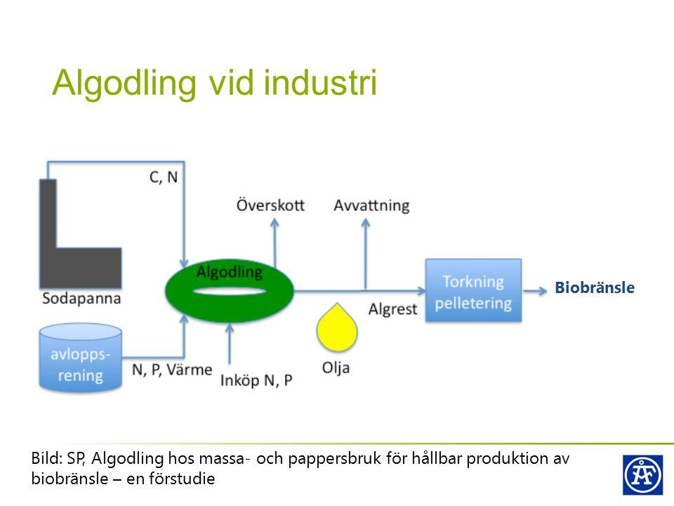 Algodling vid industri