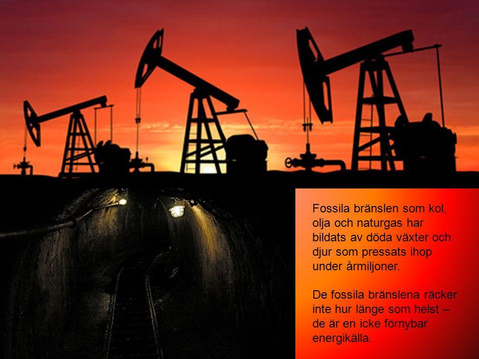 Fossila bränslen som kol, olja och naturgas har bildats av döda växter och djur som pressats ihop under årmiljoner.