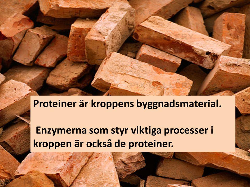 Proteiner är kroppens byggnadsmaterial.