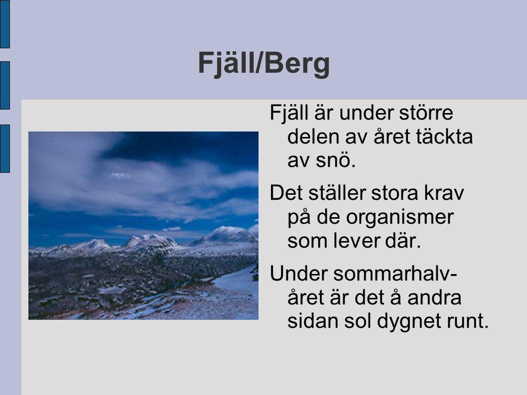 Fjäll/Berg Fjäll är under större delen av året täckta av snö.