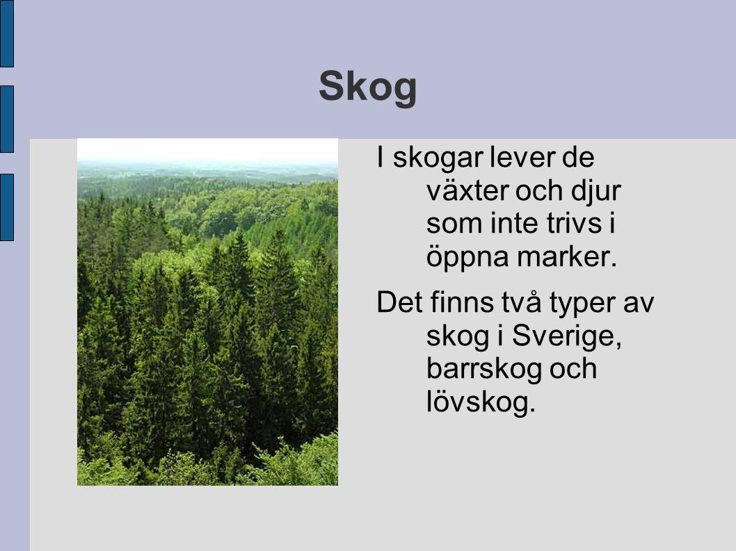 Skog I skogar lever de växter och djur som inte trivs i öppna marker.