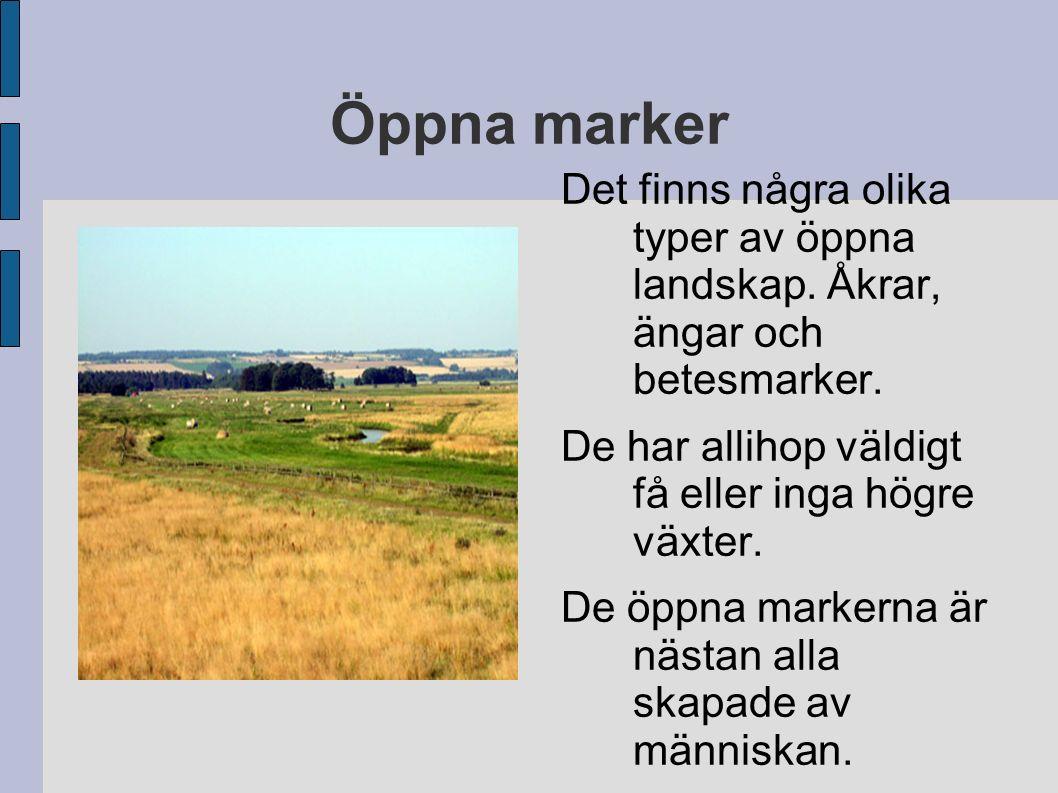 Öppna marker Det finns några olika typer av öppna landskap. Åkrar, ängar och betesmarker. De har allihop väldigt få eller inga högre växter.