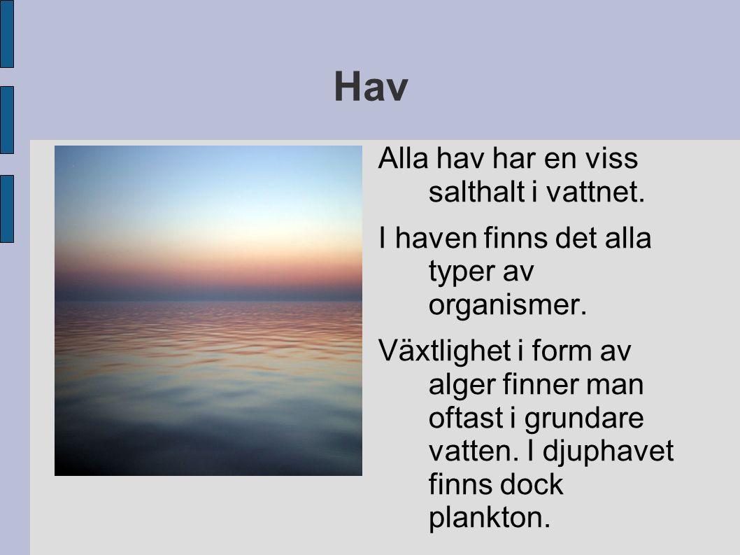 Hav Alla hav har en viss salthalt i vattnet.