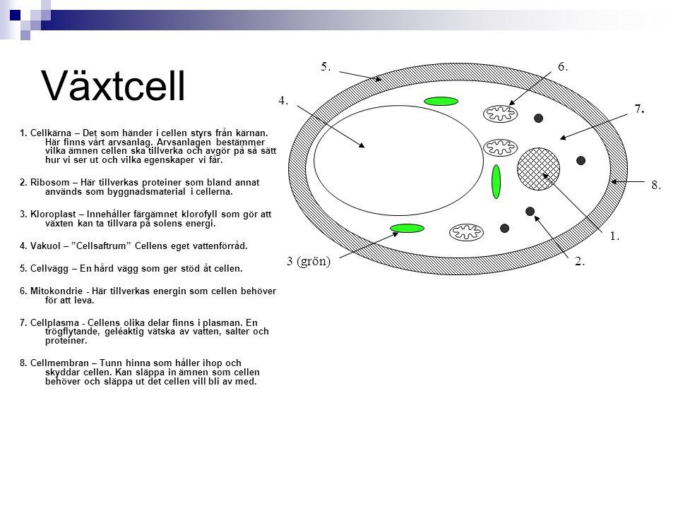 Växtcell 2. 1. 3 (grön) 4. 5. 7. 6. 8.