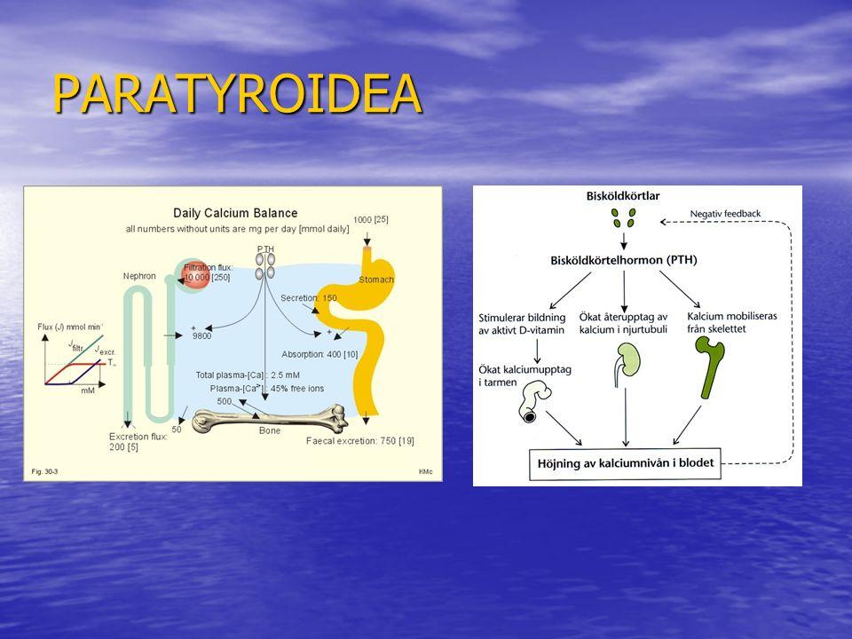 PARATYROIDEA