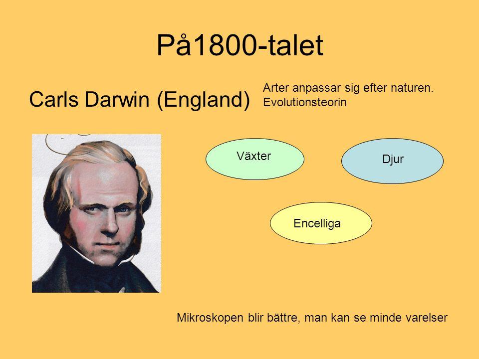På1800-talet Carls Darwin (England)