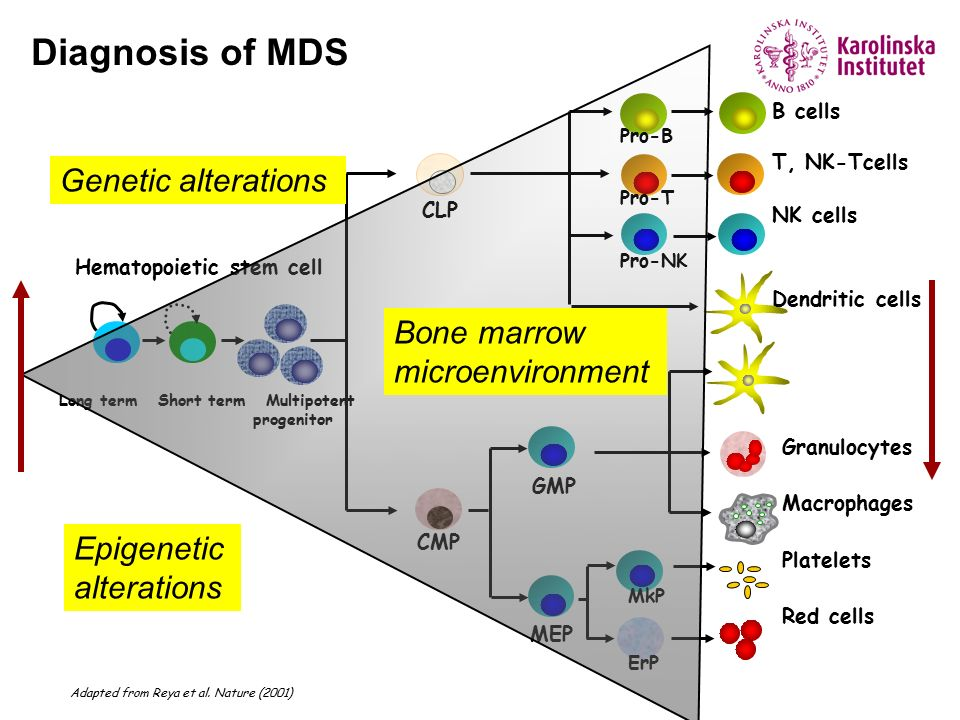 Diagnosis of MDS Genetic alterations Bone marrow microenvironment