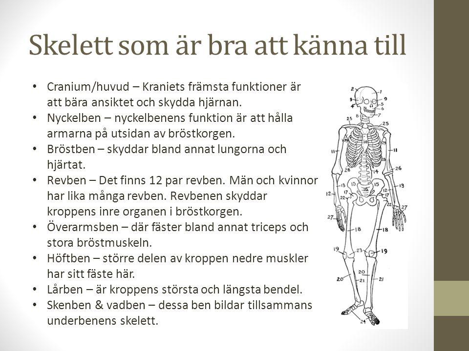 Skelett som är bra att känna till