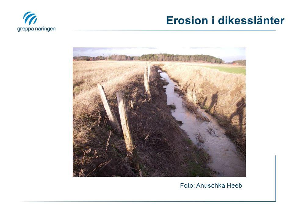 Erosion i dikesslänter