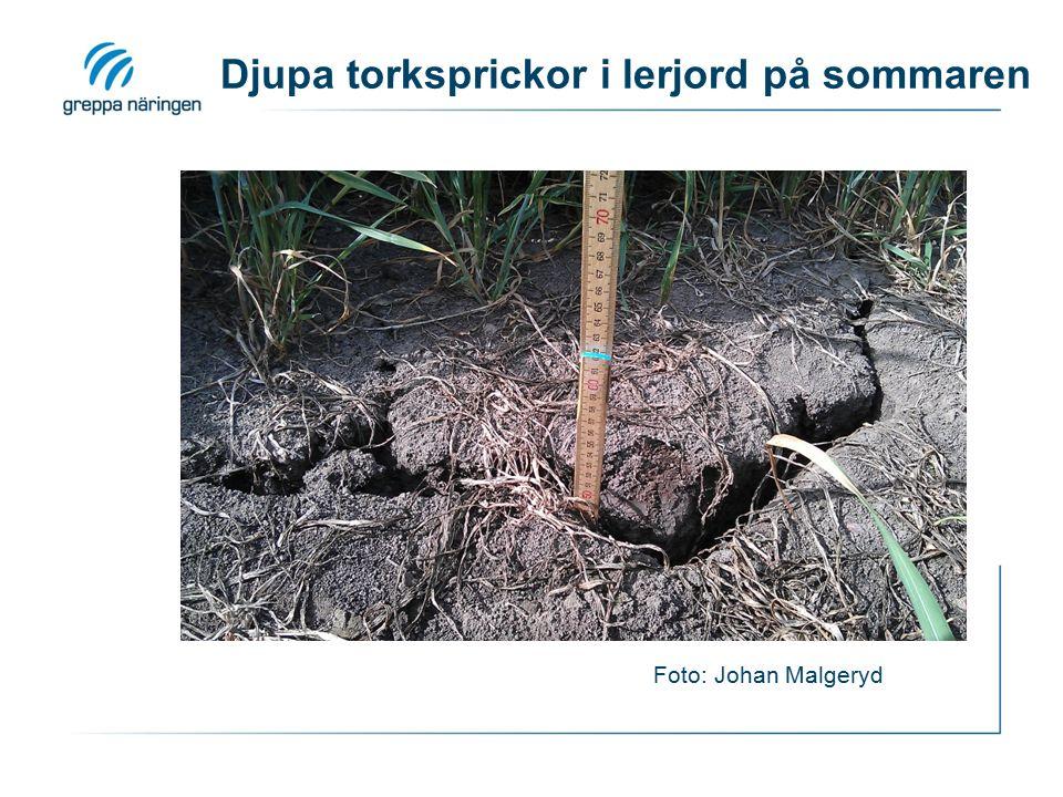 Djupa torksprickor i lerjord på sommaren