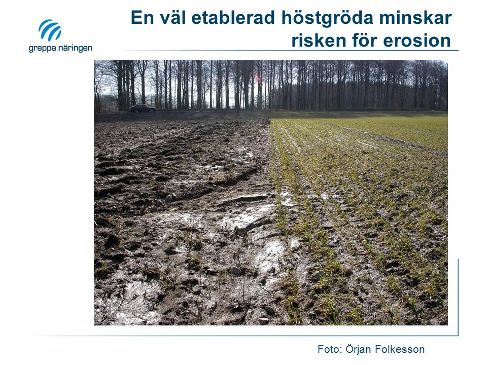 En väl etablerad höstgröda minskar risken för erosion