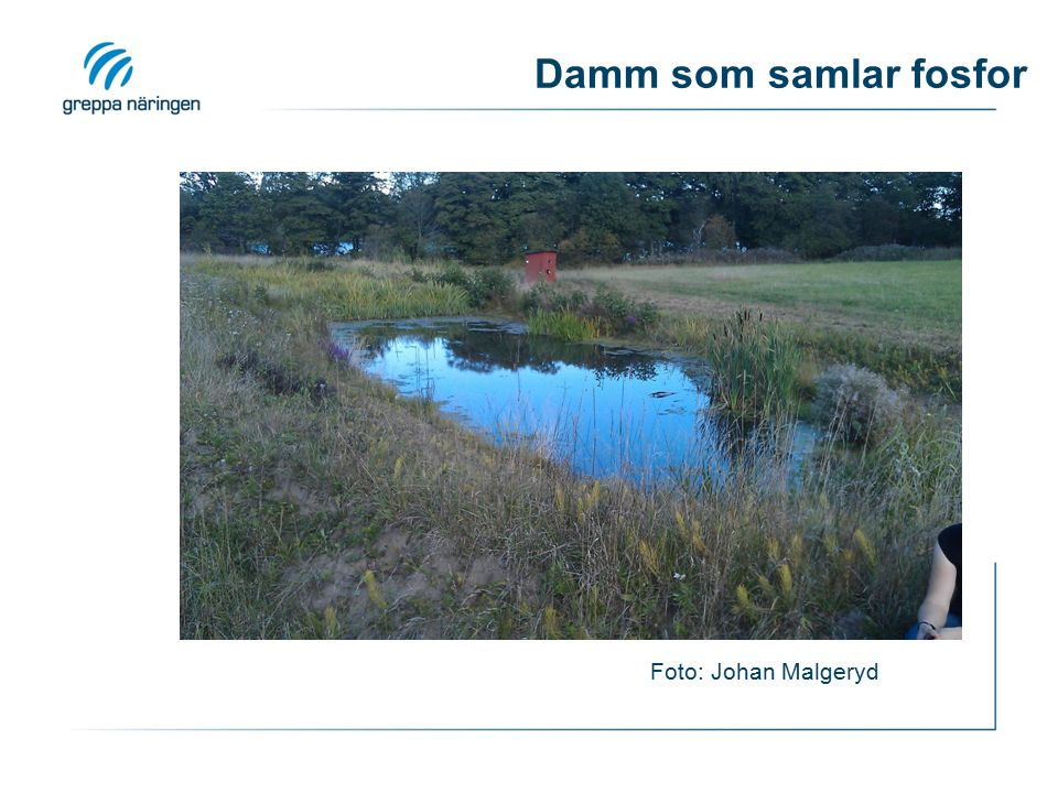 Damm som samlar fosfor Foto: Johan Malgeryd
