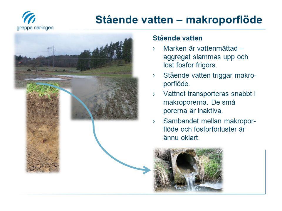 Stående vatten – makroporflöde