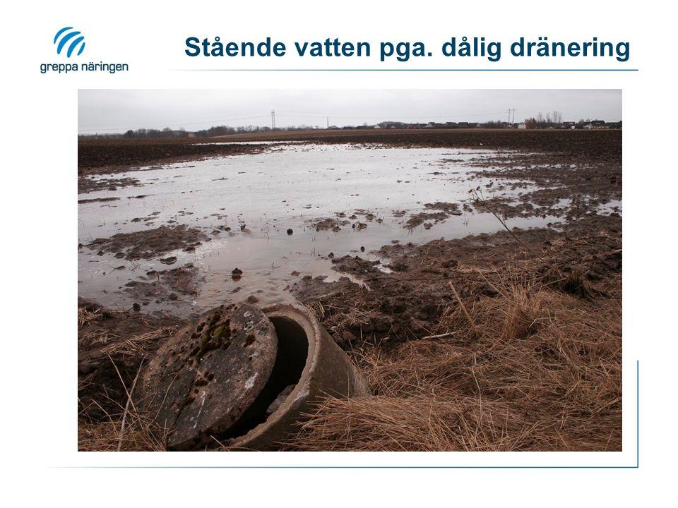 Stående vatten pga. dålig dränering