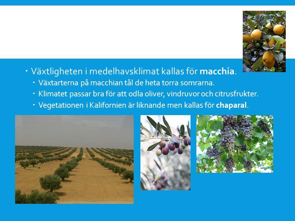 Växtligheten i medelhavsklimat kallas för macchia.
